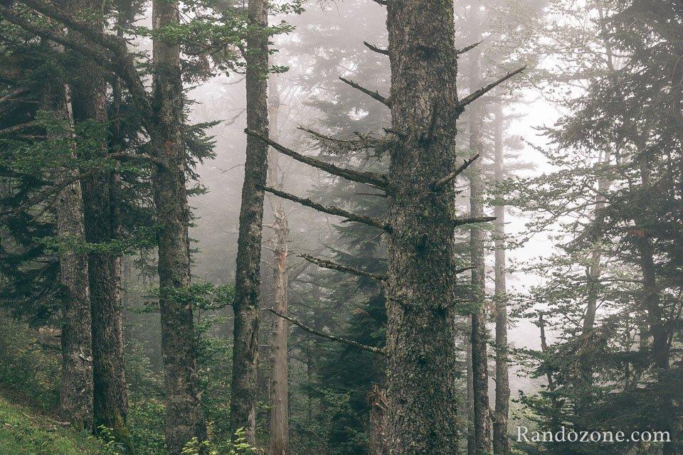 La forêt est très belle avec ce brouillard