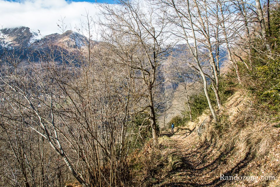 Large sentier pour monter dans la forêt